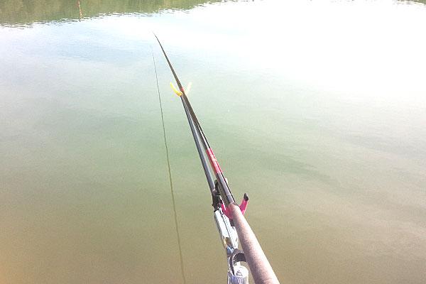 2-某野池で-うかれ鯉-硬調-360
