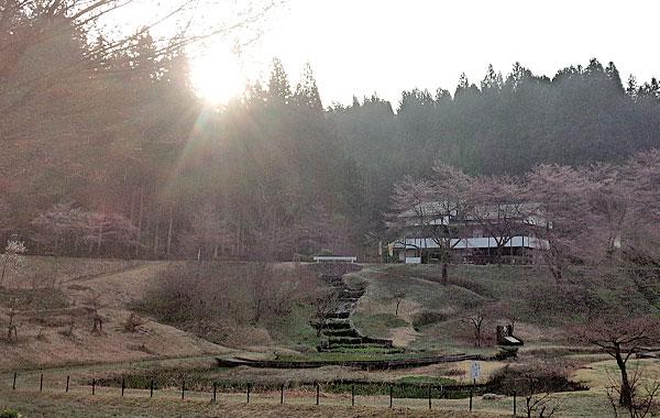 2-加茂市下条川ダムの桜はまだほとんど咲いていなかった