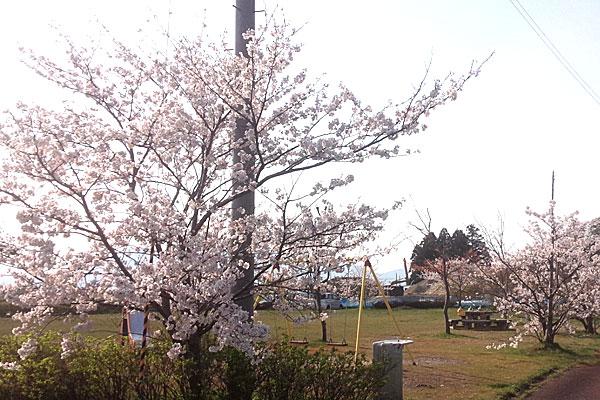 5-六郷の池-公園の桜が満開